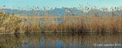 il Lago di Massaciuccoli nei pressi di Le Carbonaie